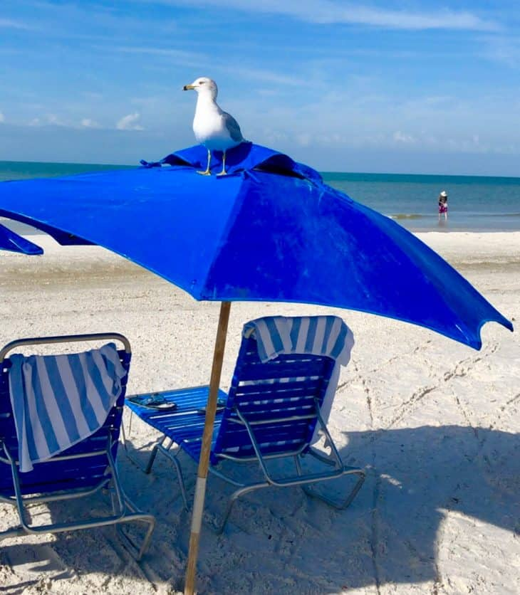 Blue umbrella over two blue chairs and a white bird