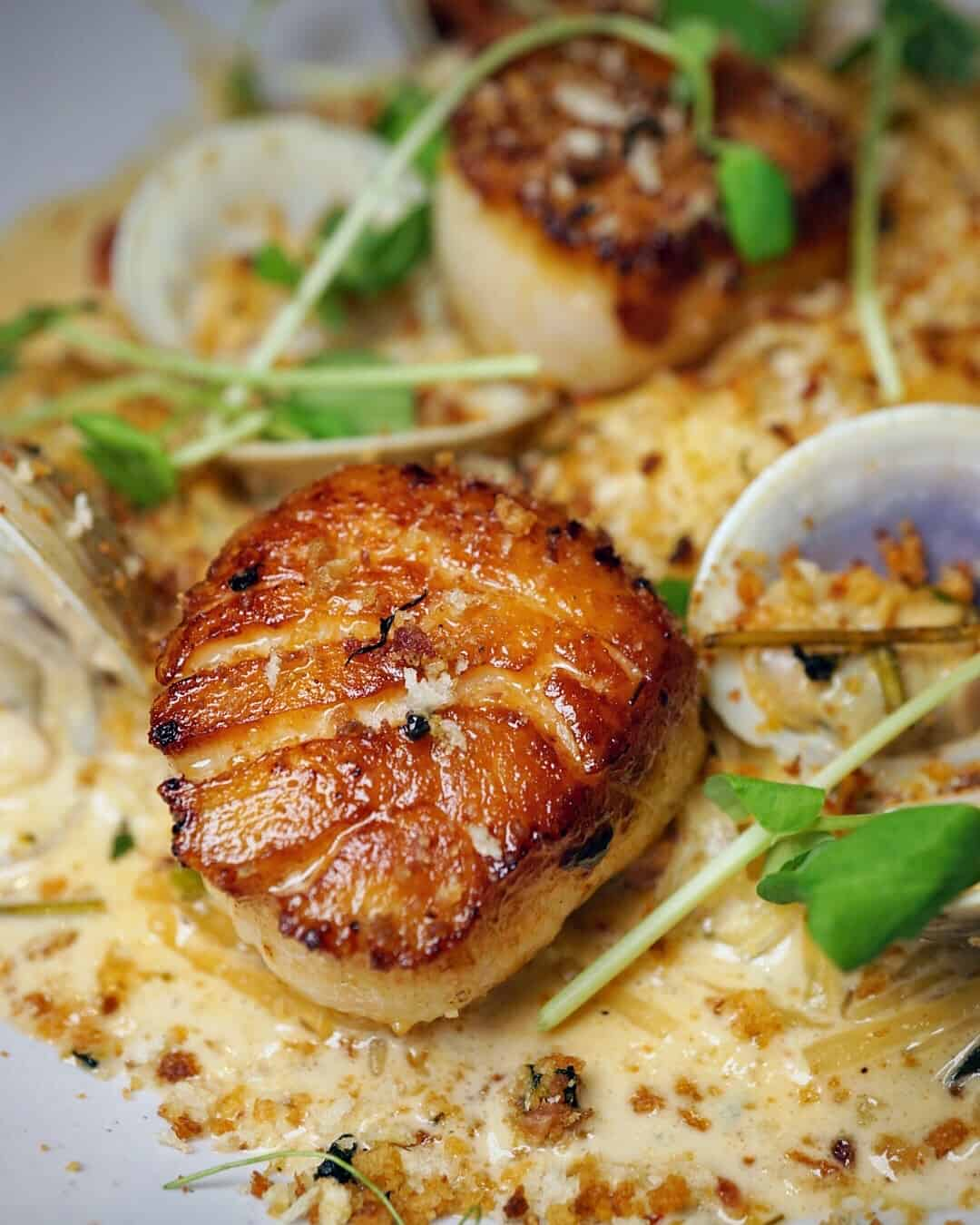 Close up of seared scallops with clams